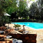 Eagles View Guest House- Pool Area