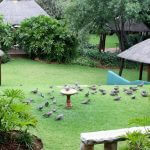 Eagles View Guest House- Garden Area